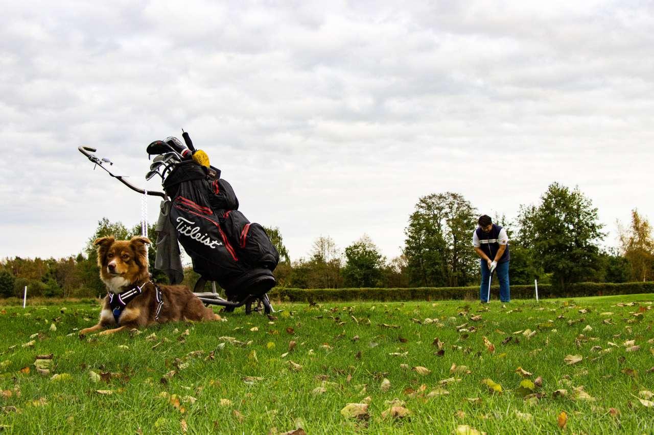Hund auf dem Golfplatz in Lilienthal